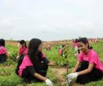 2016年の植樹の様子(10,000本を植樹)