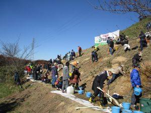 大人も子供も一緒に斜面一杯に広がって植えた